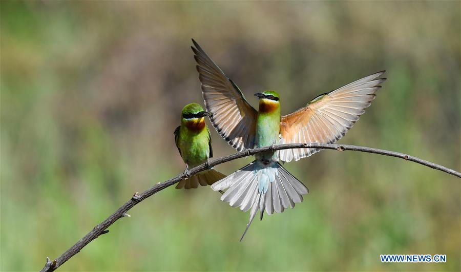 CHINA-HAIKOU-BEE EATERS (CN)
